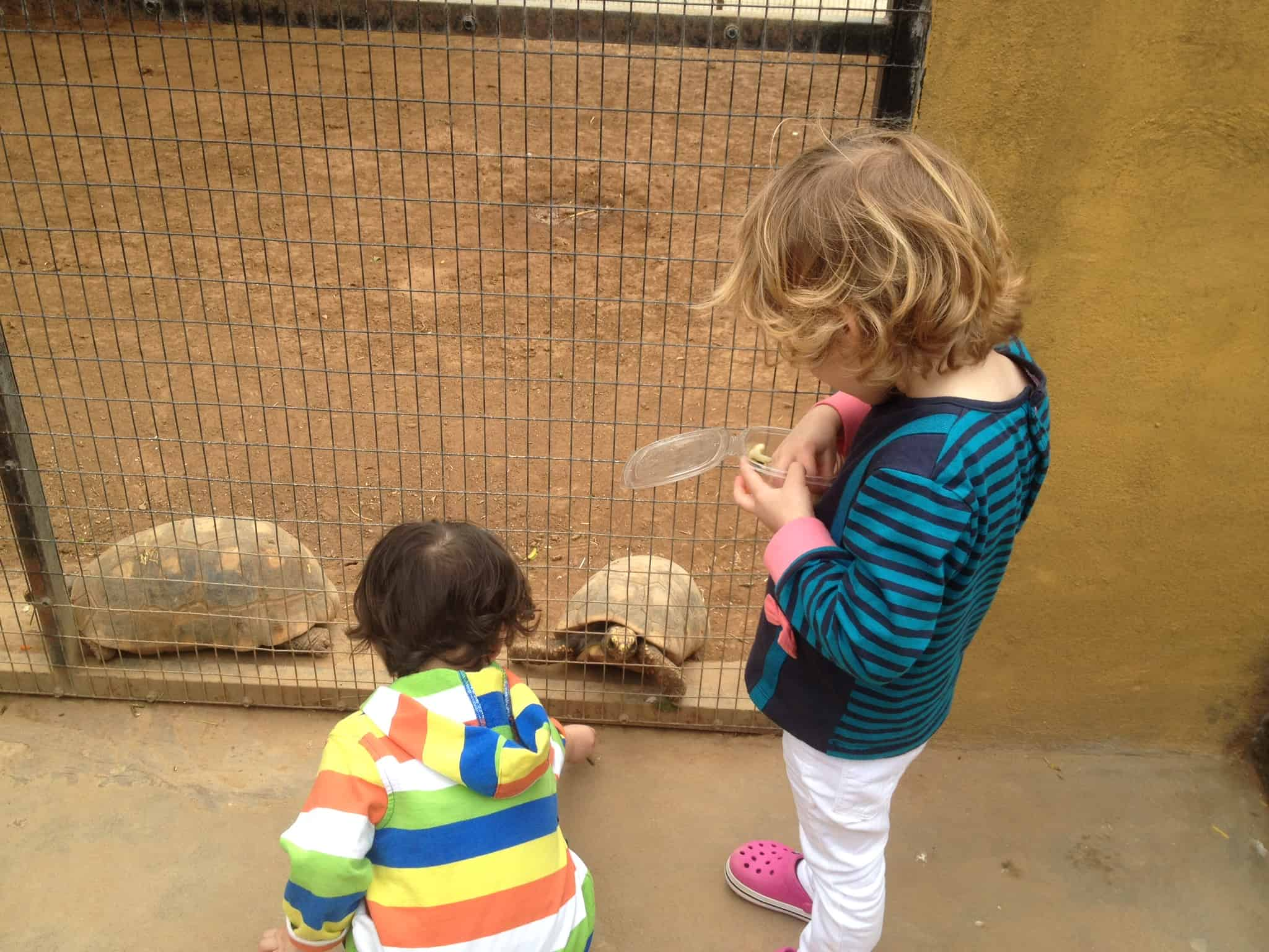 Top Five Things To Do in Tenerife With Kids   My Travel Monkey