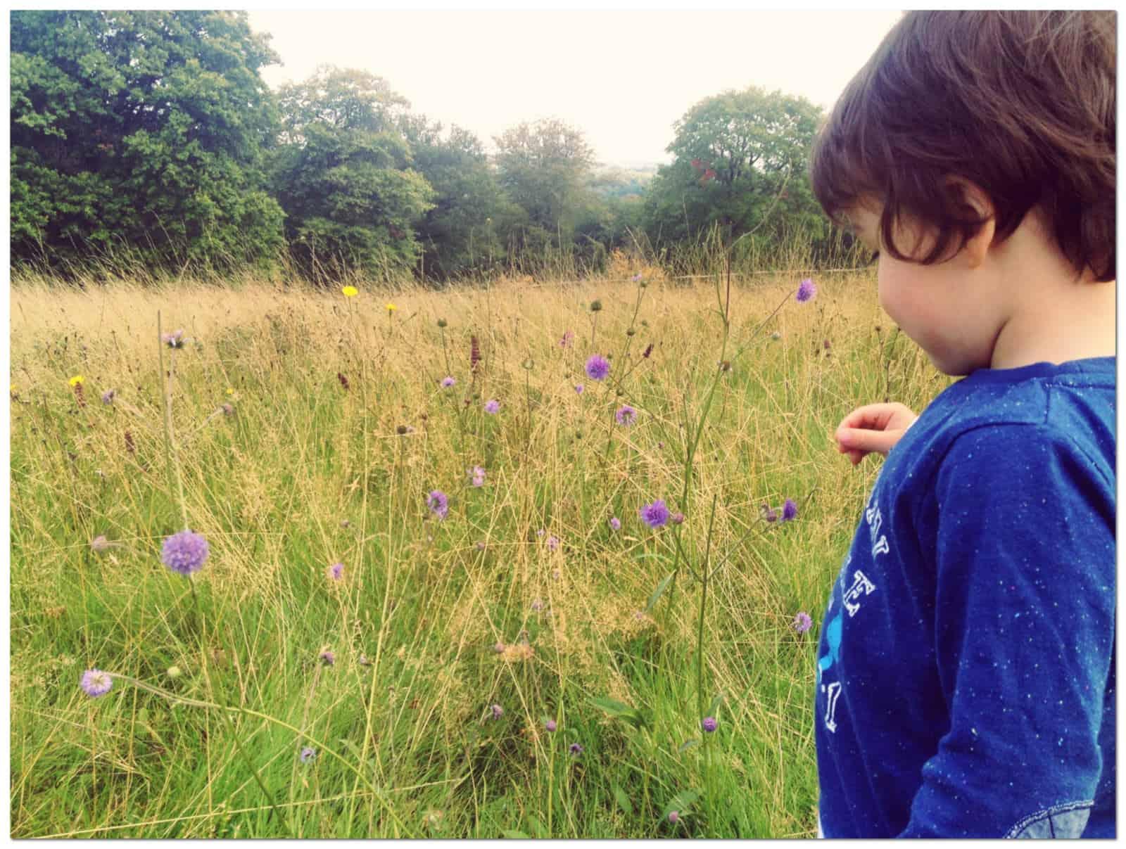 Nymans Gardens Sussex | My Travel Monkey