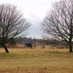 Taking A Walk Around National Trust's Knole Park