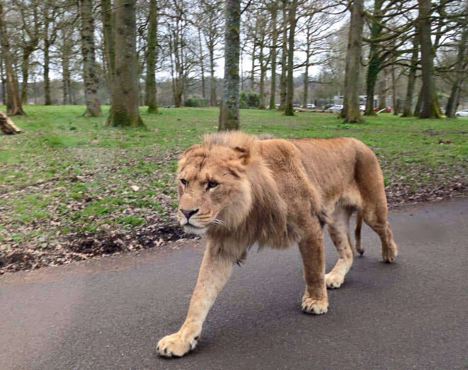 Family Fun at Longleat Safari & Adventure Park