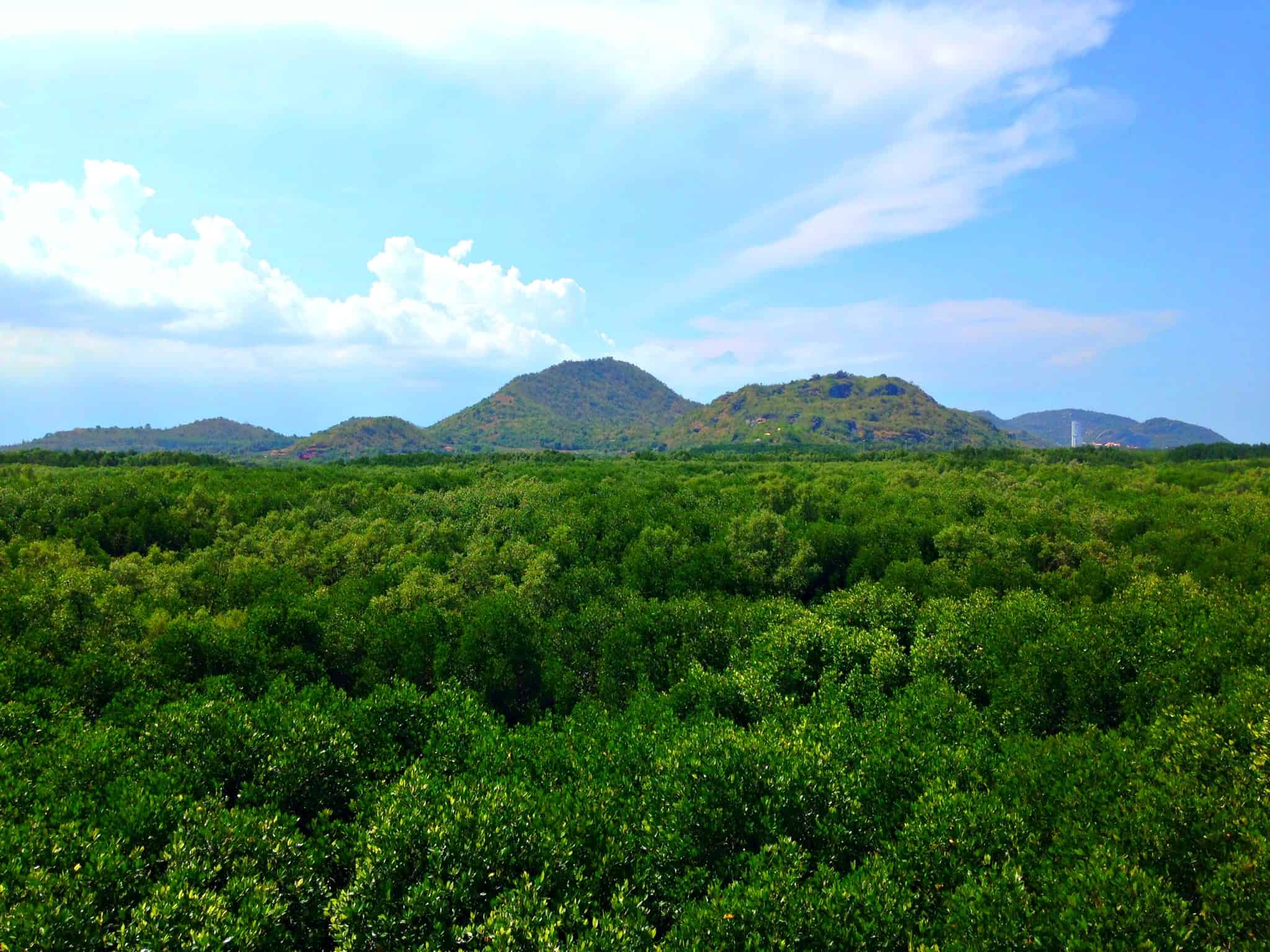 Our view across Pranburi Mangrove Forest | My Travel Monkey