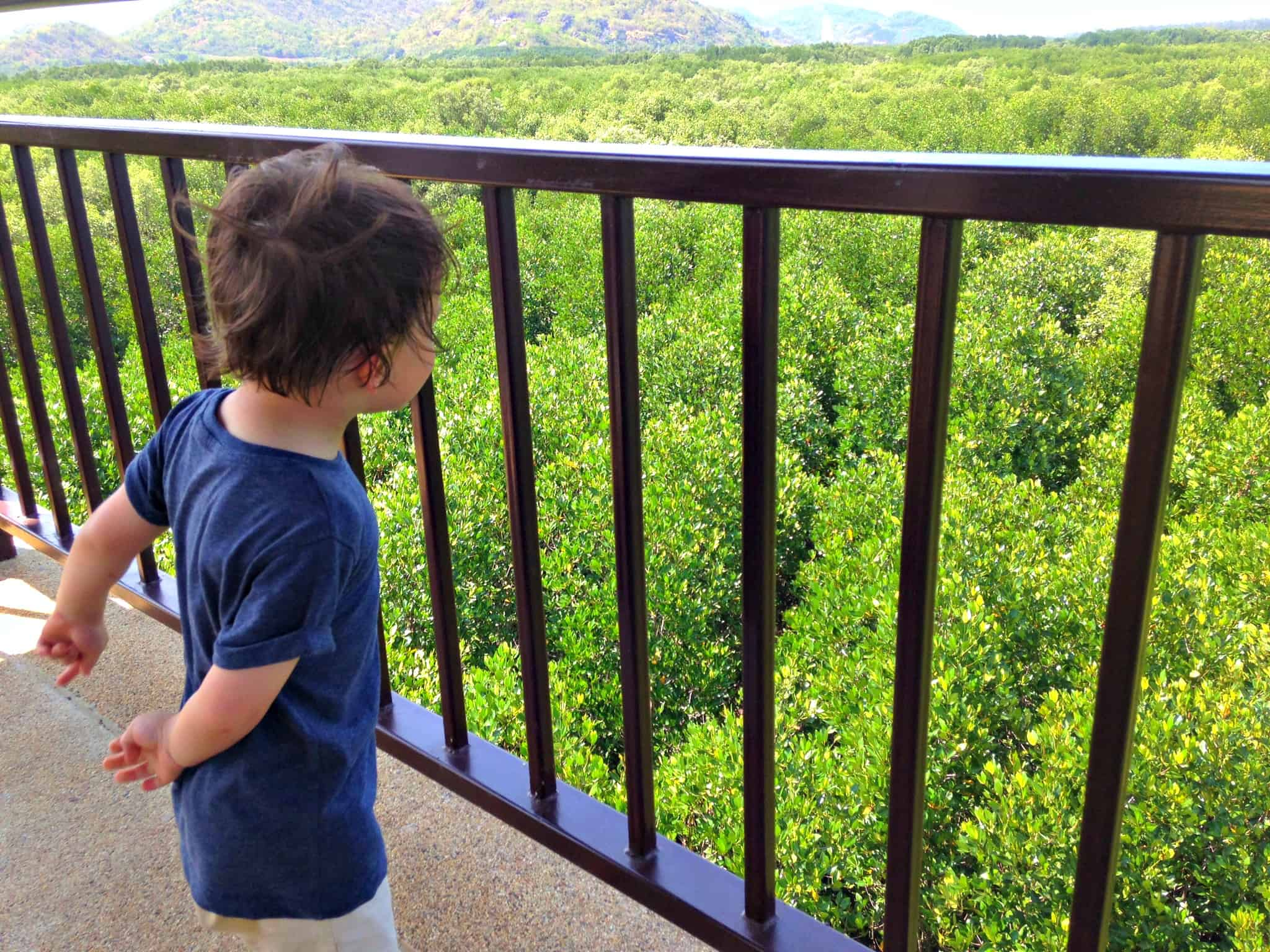 At the Pranburi Mangrove Forest Viewing Deck | My Travel Monkey