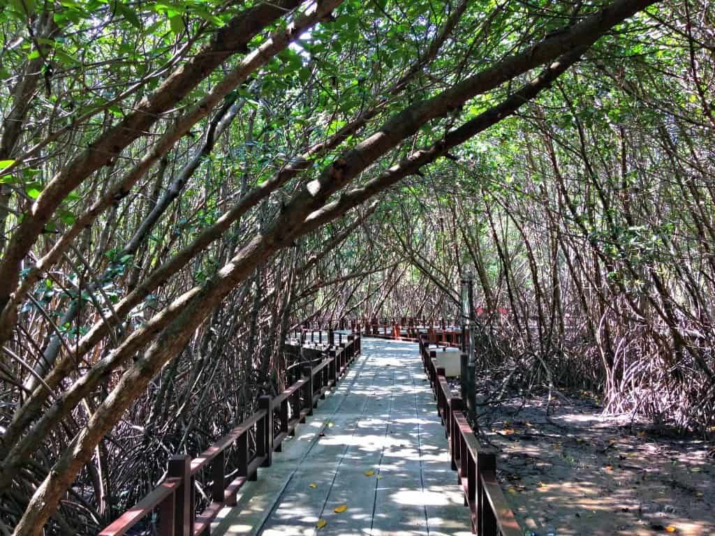 Walking through Pranburi Mangrove Forest | My Travel Monkey