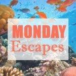 Monday Escapes #14