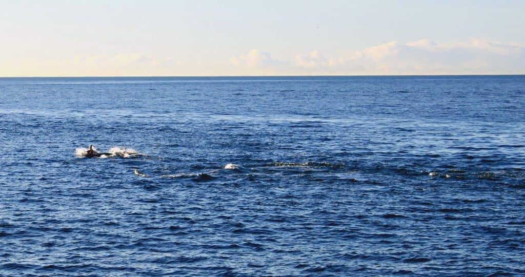 Elding Whale Watching in Reykyavík, Iceland