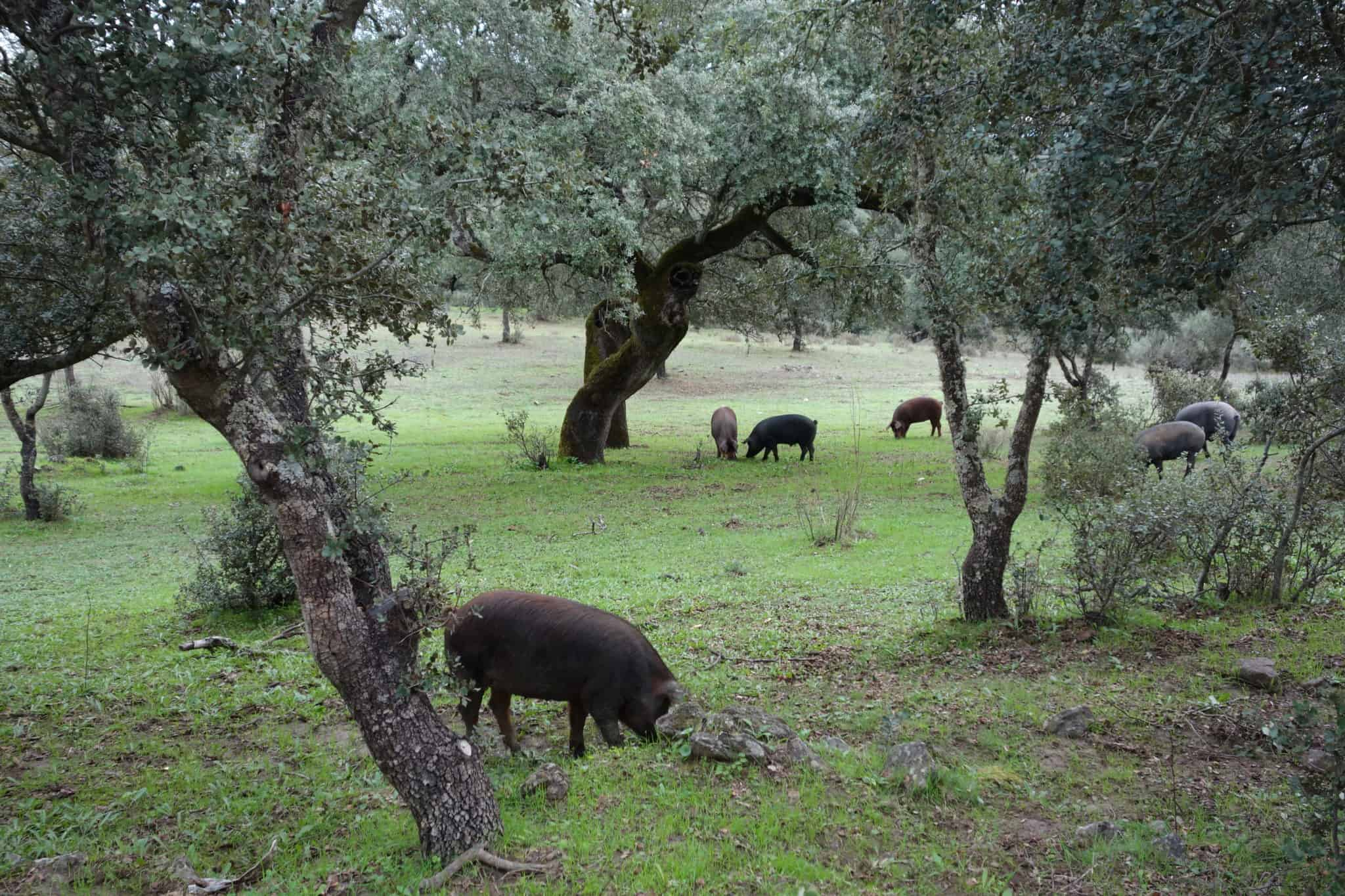 Holidays To Extremadura - A Ham Safari | My Travel Monkey