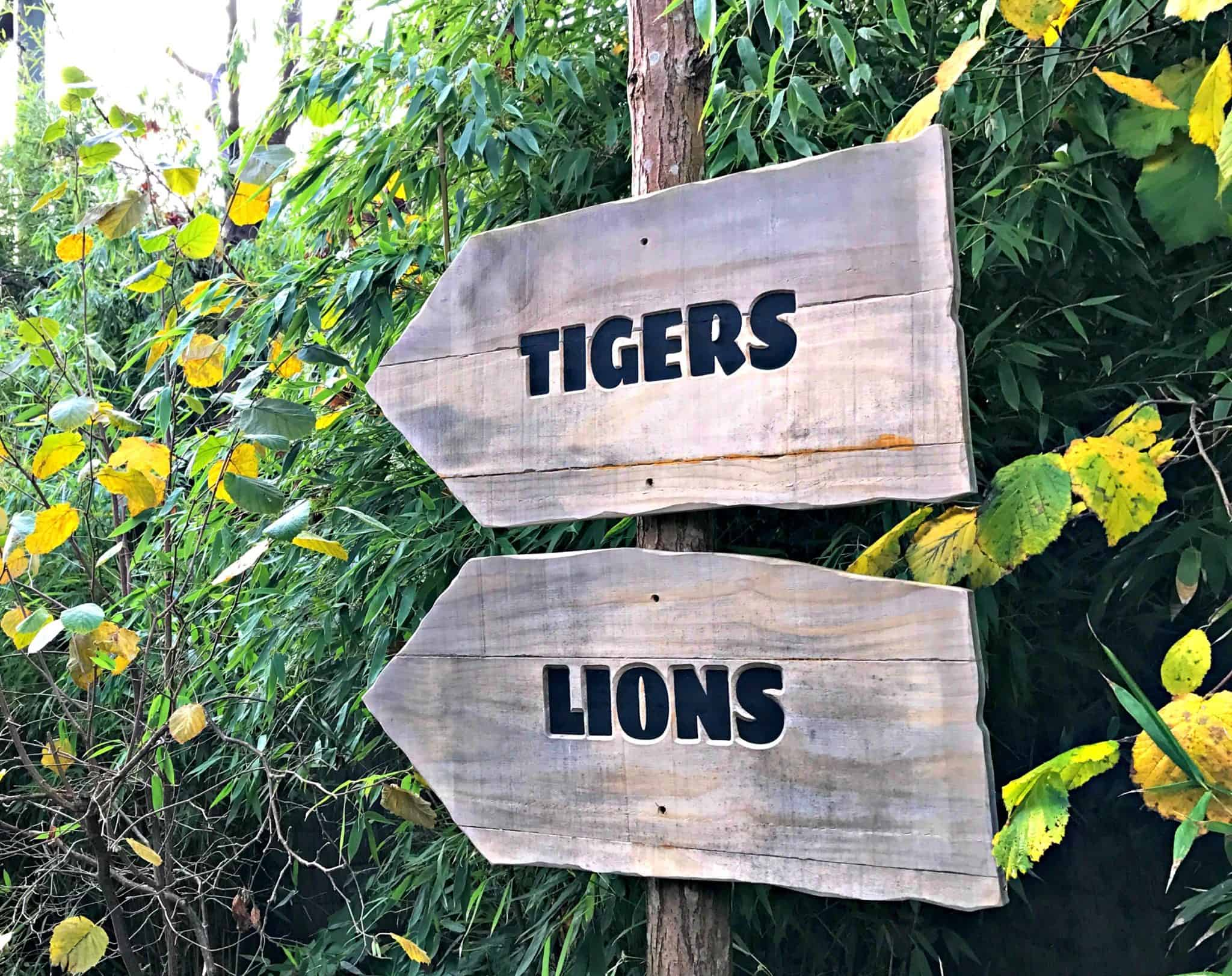 Taking The Winter's Trail at Chessington World of Adventures