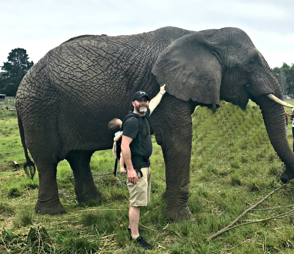 Walking With Elephants at Knysna Elephant Park, South Africa | My Travel Monkey