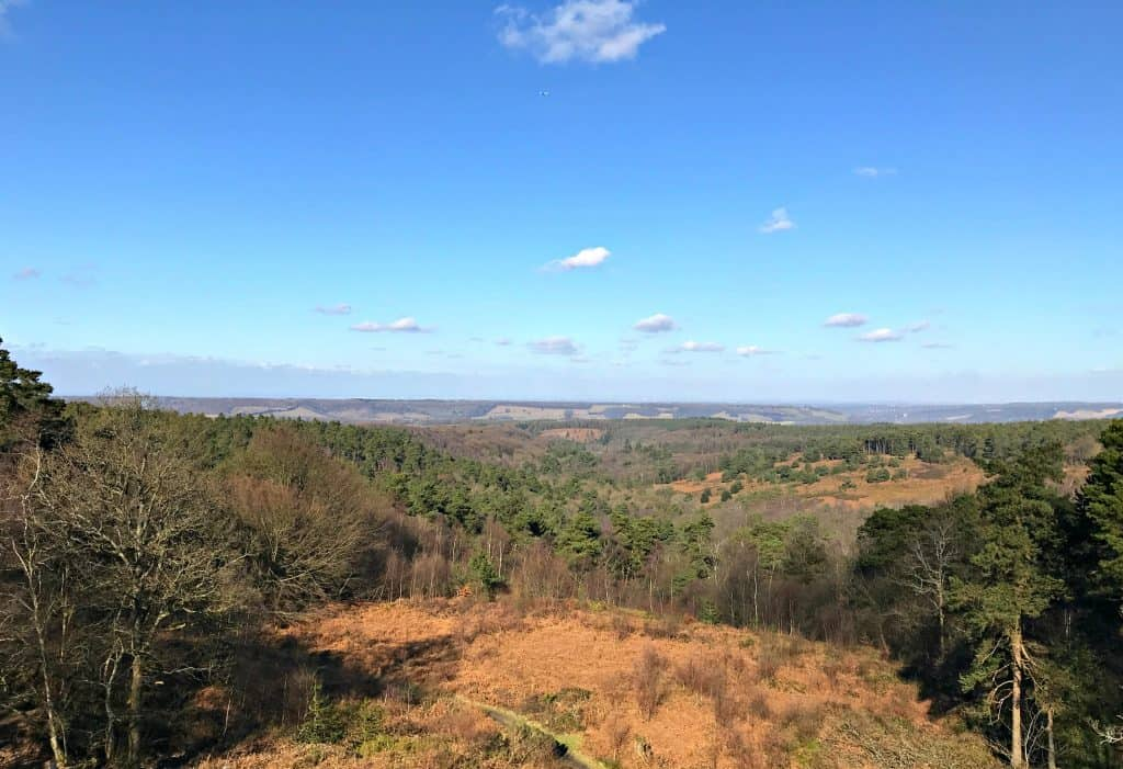 Exploring The National Trust's Leith Hill and Tower in Dorking, Surrey