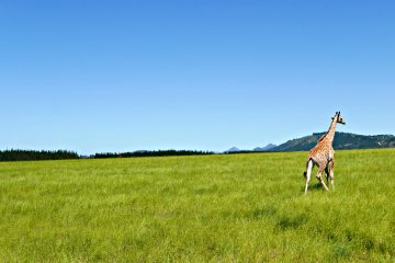 Experiencing A Safari Game Drive at Plettenberg Game Reserve, South Africa