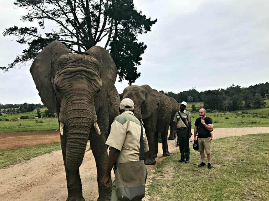 Knysna Elephant Park | My Travel Monkey