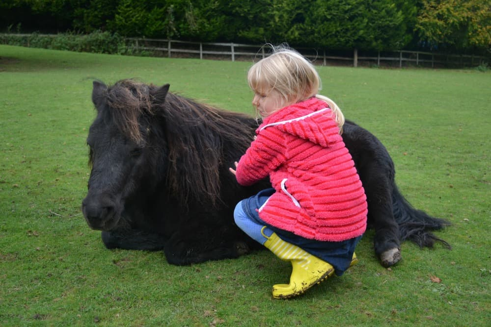 Things To Do in Dartmoor With Toddlers