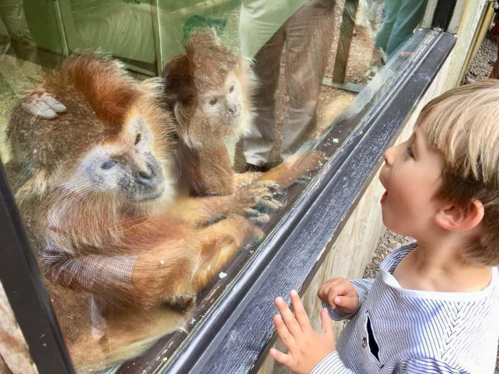 Toddler Friendly Holidays UK | My Travel Monkey