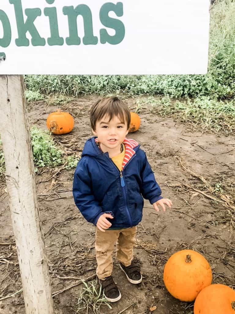 Pumpkin picking Surrey | My Travel Monkey