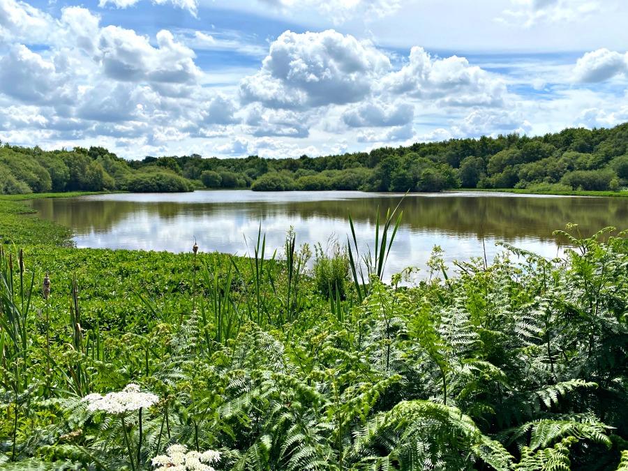 Stew Pond at Epsom Common- My Travel Monkey